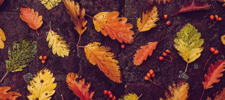 Jaka czeka nas jesień?