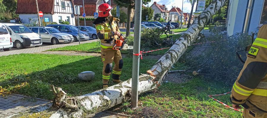 Drzewo spadło na budynek poradni przy ul. Wajdy