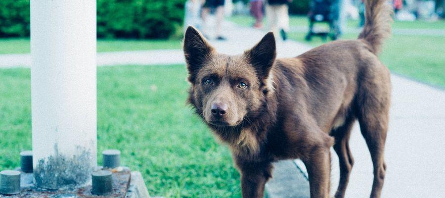 Właściciele nieodpowiednio zajmujący się psami, muszą liczyć się z karą