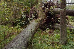 Trwają jesienne porządki w Lesie Kumiecie