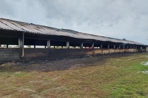 300 świń zginęło w pożarze chlewni! [ZDJĘCIA]