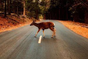 Ostrożnie, zwierzęta na drogach!