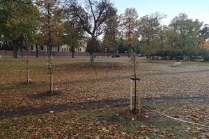 Drzewa przypomną o historii