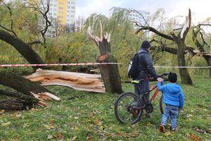 Gdzie wiatr powalił najwięcej drzew?