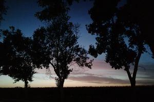 NieboLema: Niebiańskie drzewa