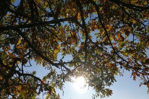 NieboLema: słońce na dębie