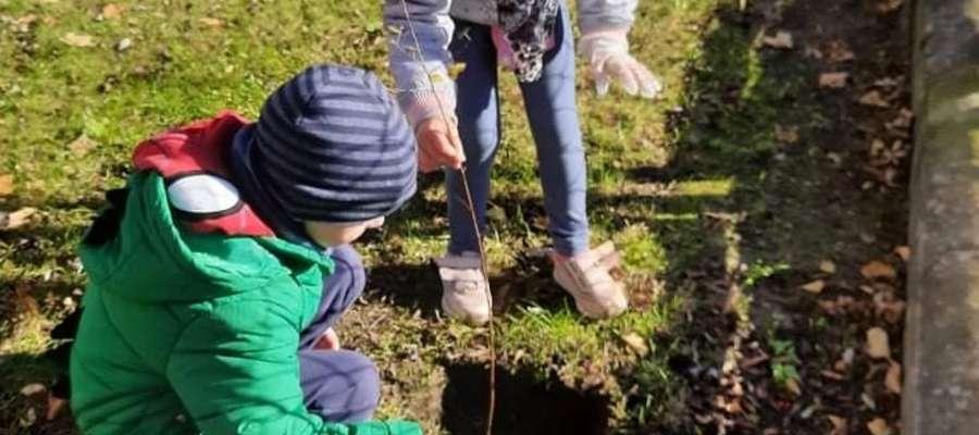 Mali Odkrywcy sadzą drzewka